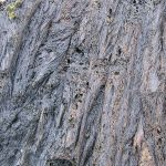 Stretched texture in Icelandic lava.